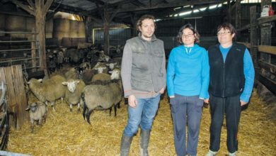 Photo of Raisonner le nombre de traitements vermifuges des ovins