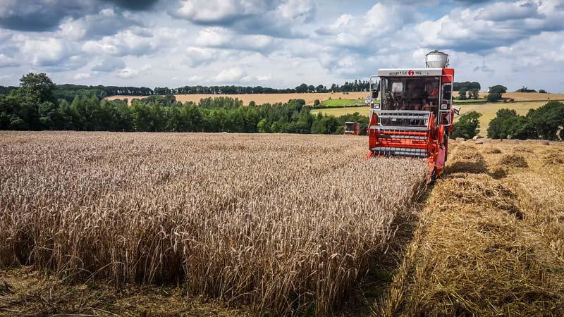 recolte-moisson-essais-bles-cereales
