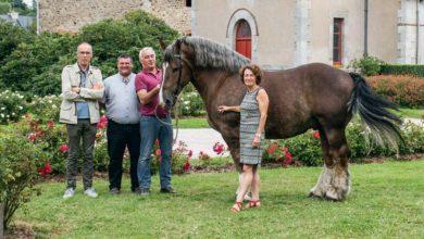 Photo of Samedi, le Cheval breton s'installe au Haras de Lamballe