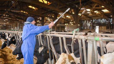 Photo of La note d'état des vaches mesurée en un clic