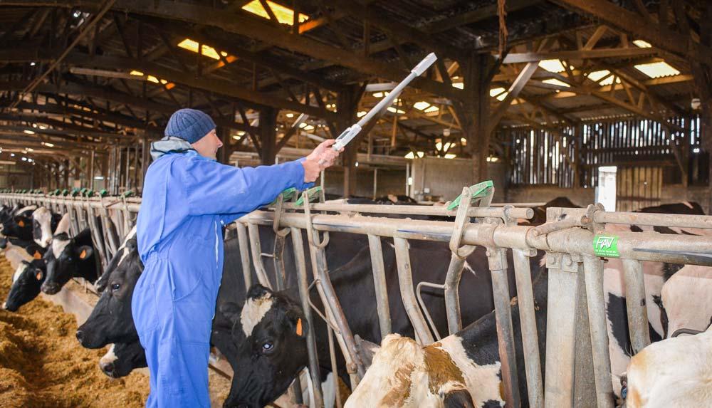 En quelques secondes, l'outil donne la note d'état corporel de la vache.