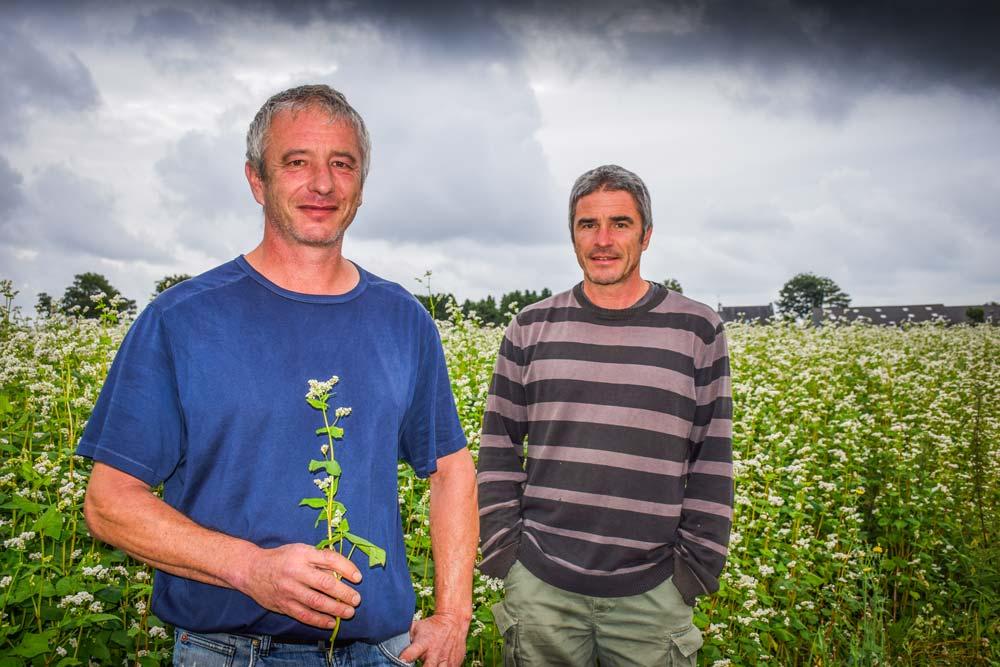 Nicolas et Stéphane Postic, avec une centaine d'hectares de blé noir, sont parmi les premiers producteurs en Bretagne.