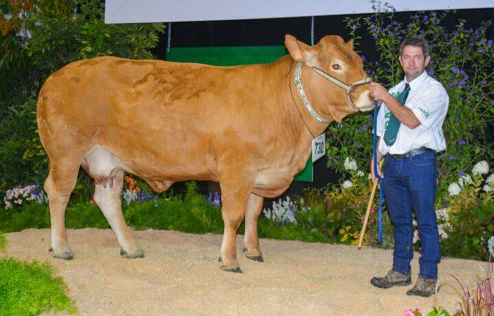 Hotesse, première des «vaches pleines» et «femelles qualifiées.»