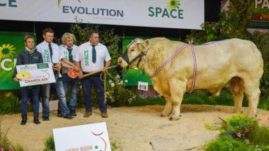 Photo of La Bretagne au rendez-vous dans les concours races à viande