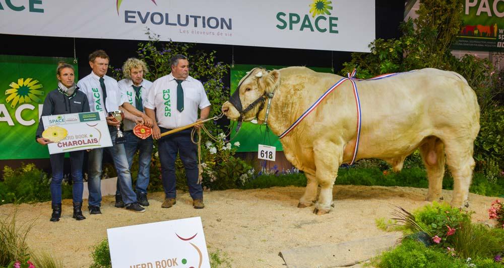 Jolicoeur a été primé Champion mâle du Festival génétique national Charolais.