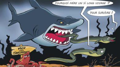 Photo of Le mystère de l'anguille