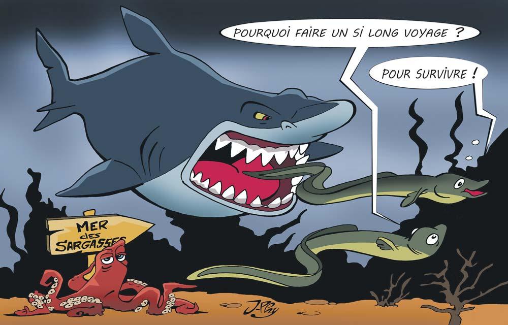 Le-mystere-de-anguille