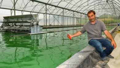 Photo of Spiruline de Brocéliande : Diversification réussie dans la micro-algue