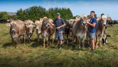 Photo of Brune : le meilleur compromis lait et taux