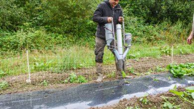 Photo of Maraîchage : s'appuyer sur une canne pour planter