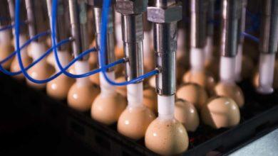 Photo of Ceva : «Pour les volailles, la vaccination simple ne suffit plus»