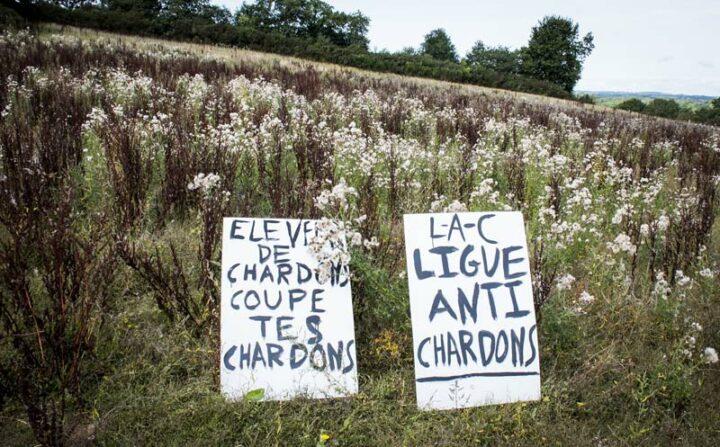 Pas toujours si simple de le dire avec des fleurs. Dans la région de Rostrenen (22), la Ligue anti-chardons (Lac) stigmatise élus et agriculteurs qui ne fauchent pas leurs chardons pour les faire réagir. Depuis un mois, l'ambiance est un peu tendue dans les campagnes.