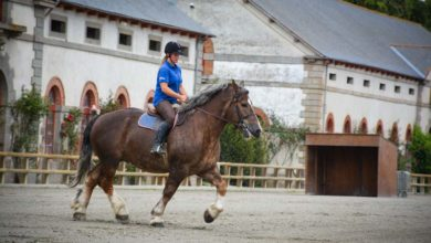 Photo of Le Cheval breton en concours national ce week-end