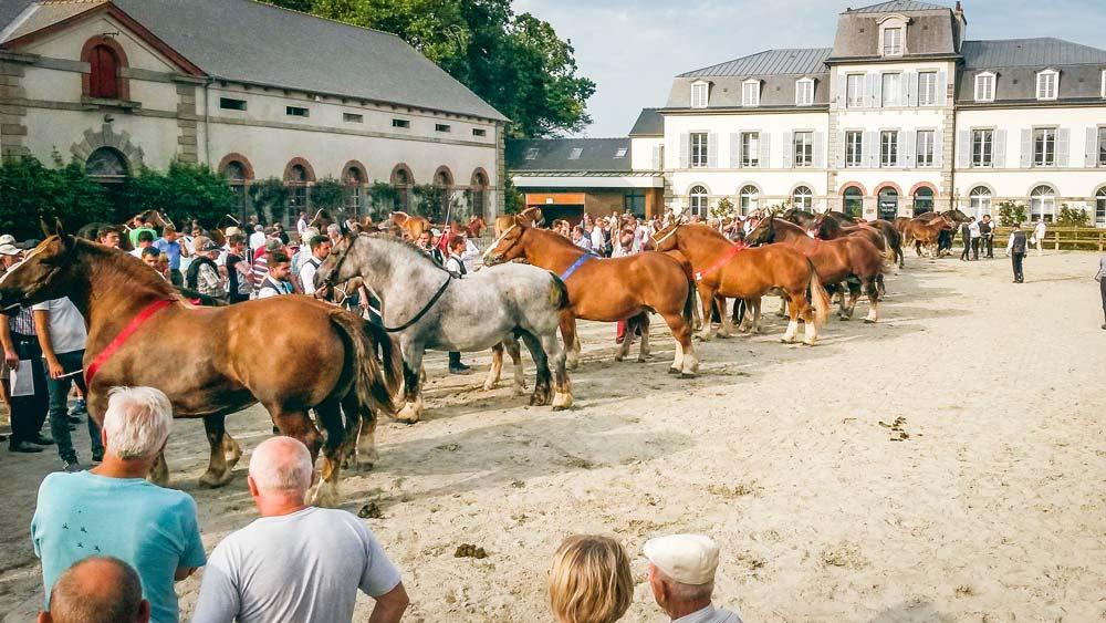 cheval-breton-lamballe
