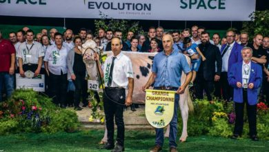 Photo of Concours Prim'Holstein : Irana fait le grand chelem