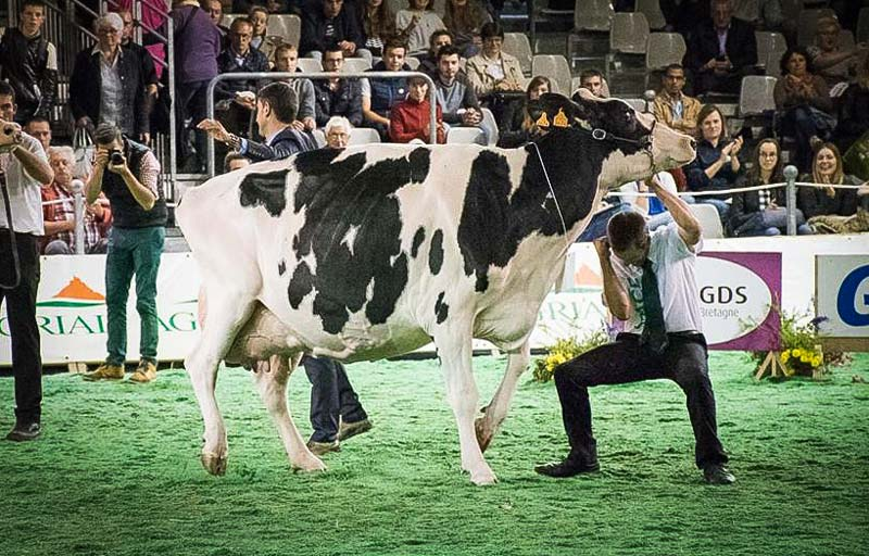 concours-holstein-space
