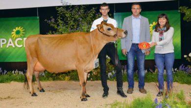 Photo of Concours Jersiaise : L'efficacité redoutable d'Hulsa