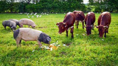 Photo of Économie bleue : un autre modèle agricole est-il possible?