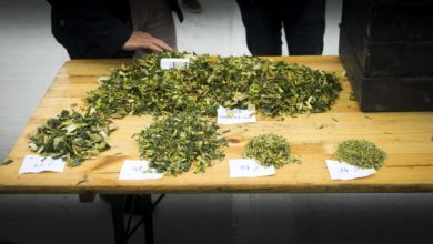 Photo of Claas Shredlage : l'éclateur de maïs livre enfin ses résultats après un an d'essais