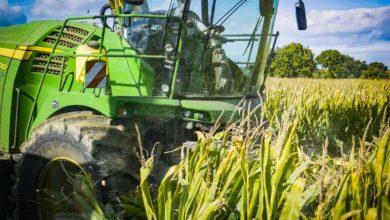 Photo of Estimer le prix du maïs fourrage