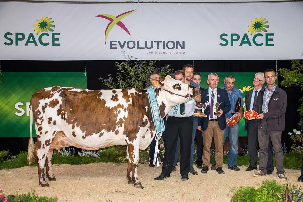 Hamilton, à Christian Tacheau dans la Sarthe, a pesé de tout son poids sur le concours: Meilleure mamelle et Championne adulte puis Grande championne.