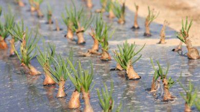 Photo of GlobalG.A.P. : une certification pour améliorer ses pratiques en légumes
