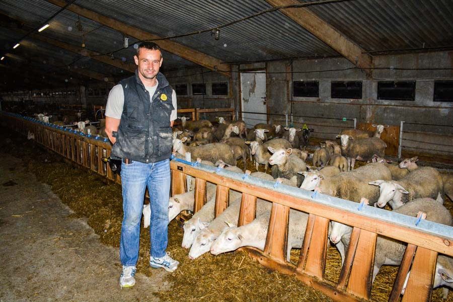 David Rondin, devant son lot de d'agnelage de juillet.