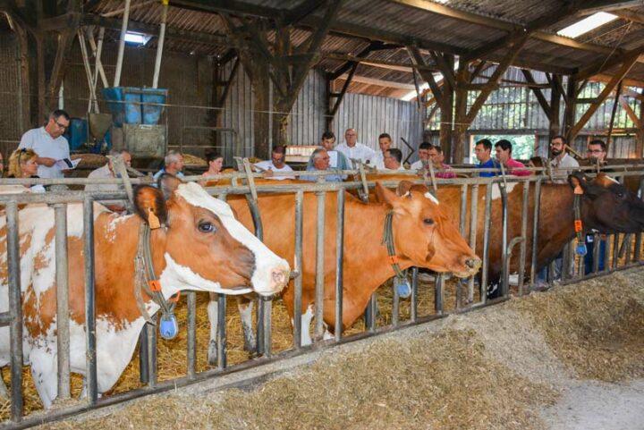 Pascal Nello et Philippe Gicquel, associés du Gaec, ont reçu les éleveurs Pie Rouge sur leur élevage lors de l'assemblée générale de France Pie Rouge en juillet dernier.