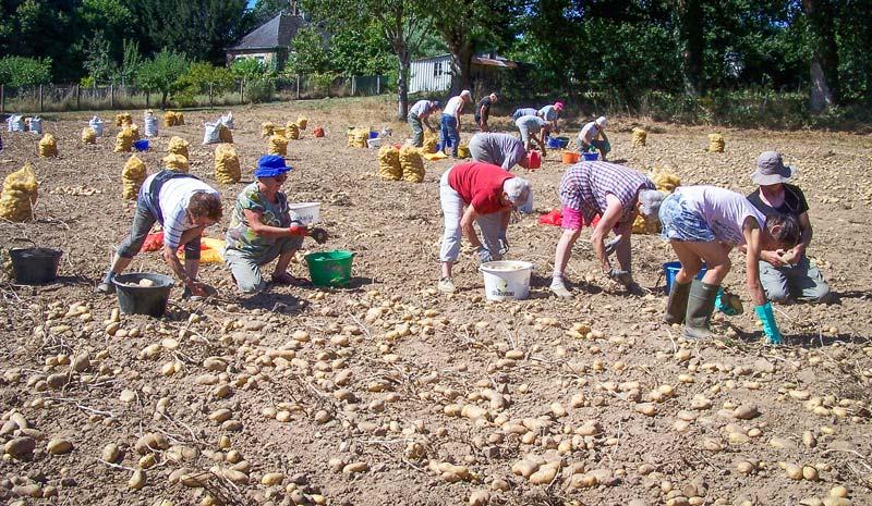 Les demi-journées (binage de flageolets ou récolte des pommes de terre) sont aussi l'occasion d'un pique-nique convivial en bordure de la Claie. Les pommes de terre sont vendues lors de journées Emmaüs ou CCFD (Comité contre la faim et pour le développement).