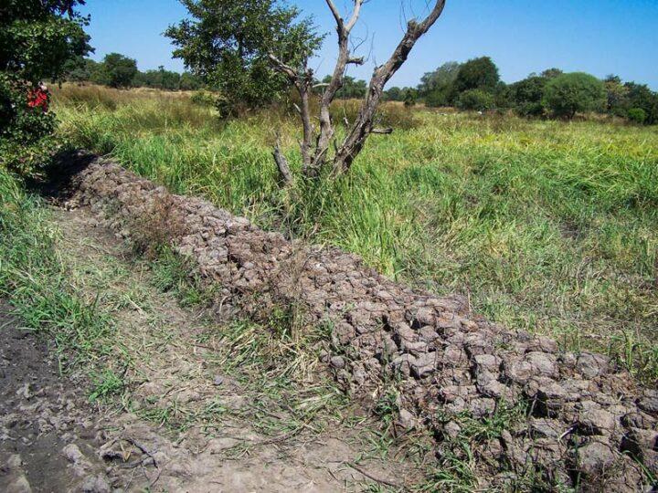 Un gabion, pour ralentir et stocker de l'eau de pluie.