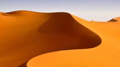 Photo of En Algérie, une ferme géante de 30000ha au cœur du Sahara