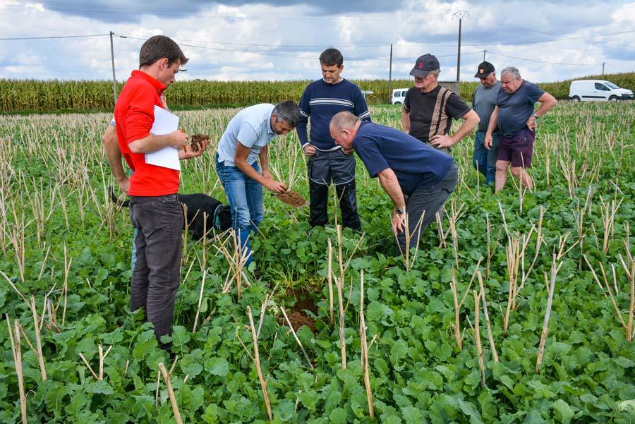 Des agriculteurs visitent une parcelle de repousses de colza dans laquelle sera semé un blé, chez Dominique Conanec (au centre), avec Denis Le Bossé, de la Chambre d'agriculture. La couverture permanente favorise la vie du sol.