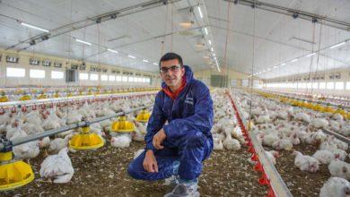Photo of Volaille : Pérenniser l'élevage et embaucher un salarié à l'élevage Tastard