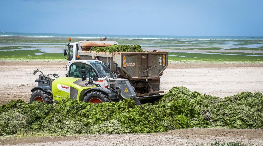 L'épandange des algues vertes en frais constitue le moyen d'élimination le plus simple et le moins onéreux. Le problème, c'est la disponibilité des terres en période estivale quand les cultures sont encore sur pied. Les volumes récoltés sont en bonne partie compostés. Le produit est normalisé et exporté.