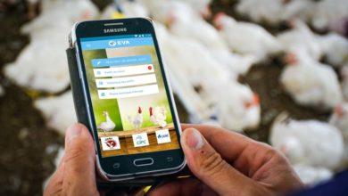 Photo of Une application pour auditer les élevages de volailles