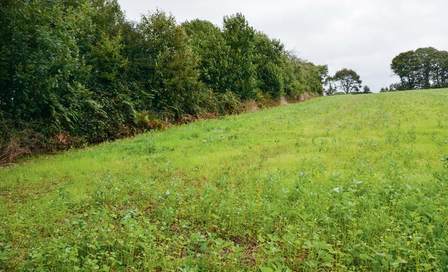 Les champs cultivés par Bernard Pouliquen présentent une très bonne continuité, avec un mélange de nombreuses espèces.
