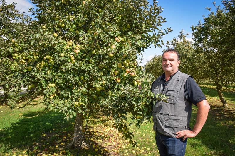 Guillevic, Douce Moën, Douce Coëtligné, Kermerrien, Bedan, Peau de chien... Dans ses vergers, Jean-Michel Nicol cultive différentes variétés de pommes à cidre, qui sont autant de crus, reflets d'un terroir.