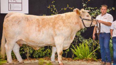 Photo of Ohh La Vache : l'Interrégional aux Côtes d'Armor