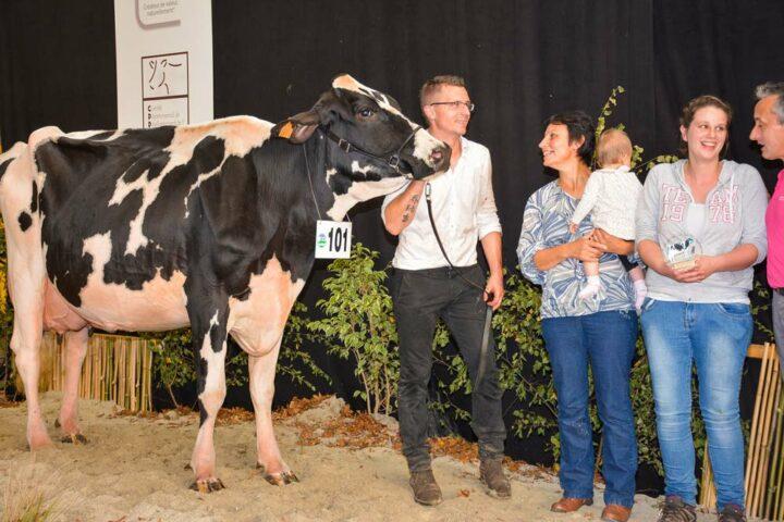Gitane (Djiby x Poland) à Mme Jegouzo de Bubry remporte la section 4 B, des vaches en 4ème lactation.