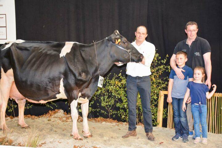 Euro (Minister x Roseo Joc) au Gaec Dano a produit 10 687 kg à 40,5 et 37,8 (TA) en 5ème lactation.