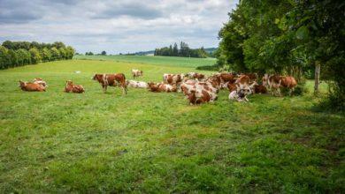 Photo of Un changement d'exploitation pour faire du lait avec de l'herbe