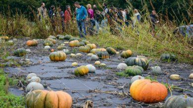 Photo of Plus de 8000 paniers de légumes livrés dans l'année