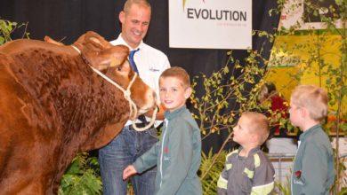 Photo of Loustic, champion des Limousins