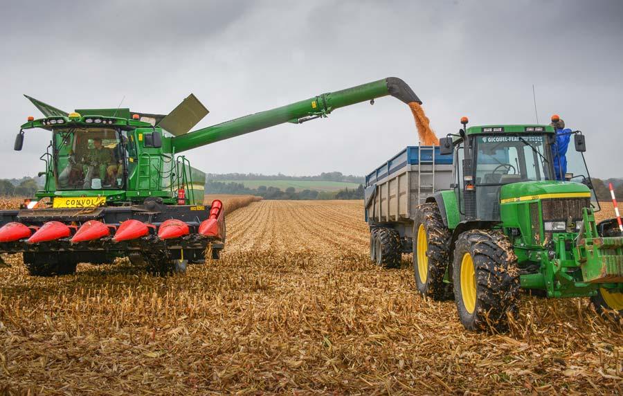 Plusieurs densités de semis ont été testées dans cette parcelle de maïs. Les rendements, recoupés avec le potentiel du sol aux divers endroits de la parcelle, livreront des enseignements aux agronomes de la Cecab-Coop de Broons.