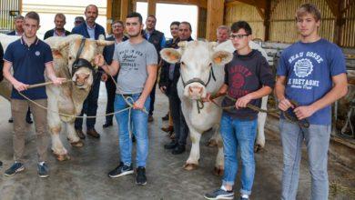 Photo of 500 animaux en concours à Ohhh la vache