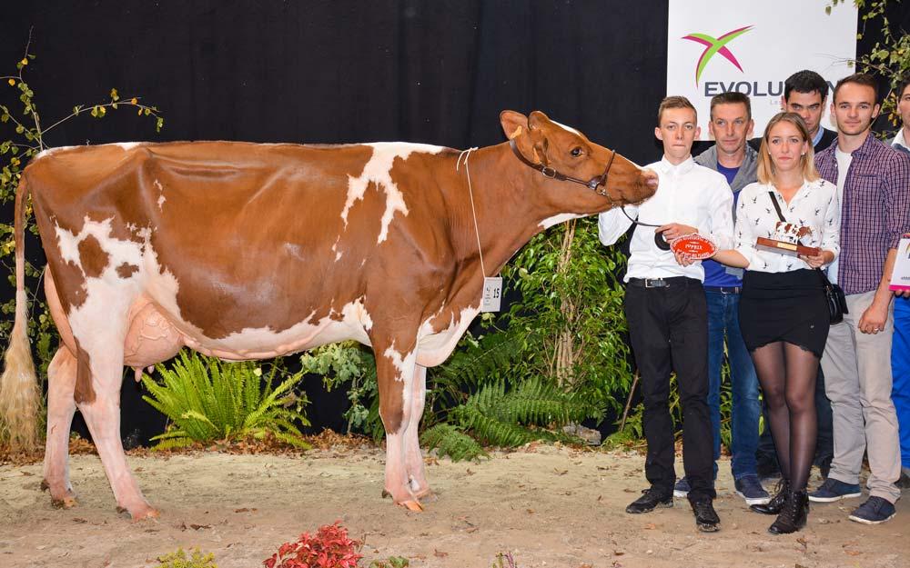 Joliecœur a produit, en 1re lactation, 6758 kg à 46,5 et 34,1 (TA).