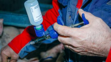 Photo of Porc : la gestion des traitements vétérinaires informatisée