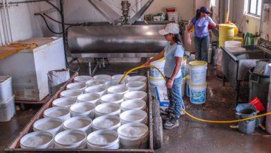 Photo of La carrière laitière se joue aux premiers jours
