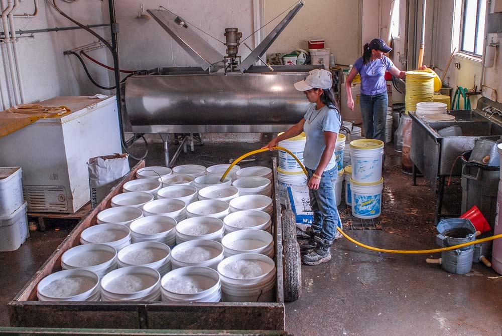 Préparation de l'aliment d'allaitement sur un élevage américain.