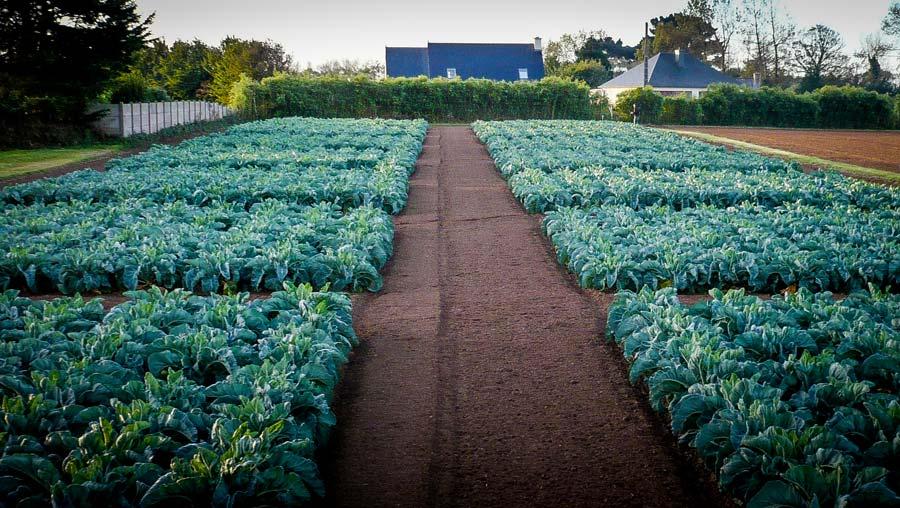 Engrais-verts-dossier-legume